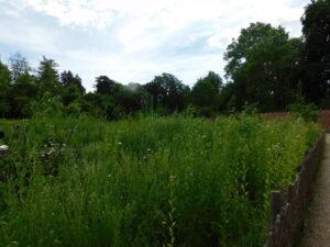 SE Parzelle im Kräutergarten