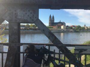 Dom von Brücke