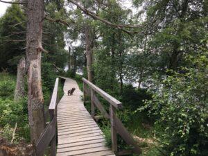 Reiseblog - Harz - Steg mit Lotte