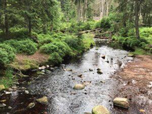 Reiseblog - Harz - Urwald 2