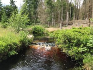 Reiseblog - Harz - Urwald 3