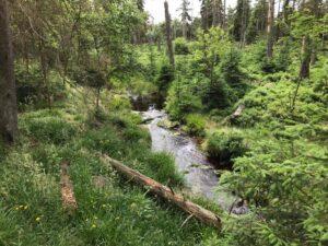 Reiseblog - Harz - Urwald