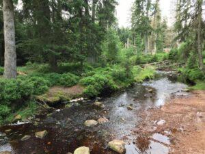 Reiseblog - Harz - Urwald 4