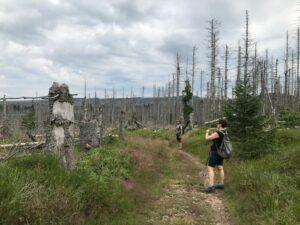 Reiseblog - Harz - Wanderer