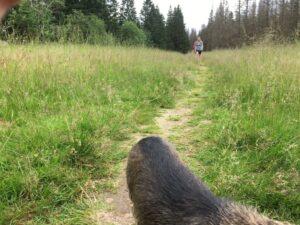 Reiseblog - Harz- Wanderfreunde