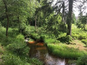 Reiseblog - Harz - Wandern 2