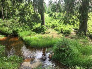 Reiseblog - Harz - Wandern 4