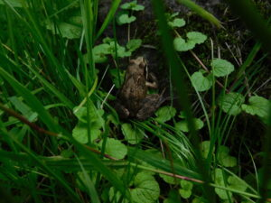 Reiseblog - Lettland - Wasserstelle Frosch