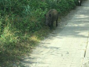 Reiseblog Schwein am Weg