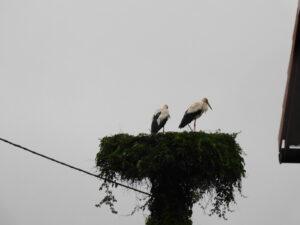 Reiseblog - Storch 2