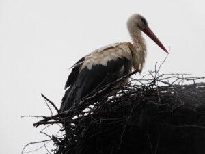 Reiseblog - Storch von der Seite