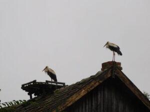 Reiseblog - Storch3