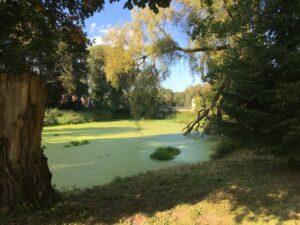 Reiseblog - Schloss Tarce - Park Teich