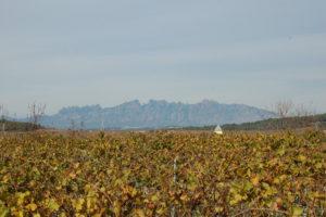 Vom Weingut Celler Can Battle blickt man über die Reben zum ca. 35 KM entfernten Montserrat.
