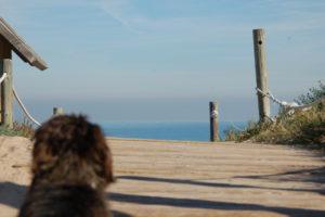 Man sieht den Dackel von hinten auf einer Holzplattform auf das Meer starren.