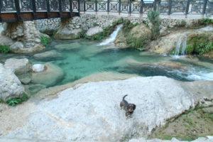 Der Dackel steht auf einem Felsen vor glasklarem blauen Wasser.
