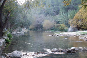 Man sieht am Waldrand einen kleinen See, der sich aus den Quellen speist.