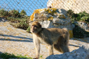 Ein Affe, der sehr nah an Lotte heran kam