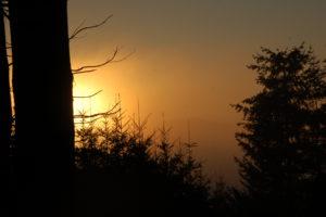 Reiseblog: Goldener Wald
