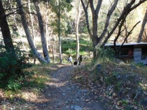 Tom zieht seinen Trolli durch den Wald