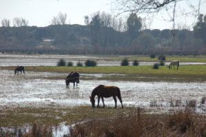 Pferde auf der Lagune
