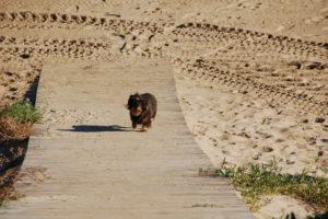 Lotte kommt nur mässig schnell vom Strand, den sie ja nicht verlassen will.