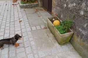 Lotte hat einen gelben Fußball gefunden, welcher in einem Blumenkübel liegt.