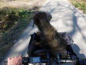 Lotte schaut aus dem Fahrradkorb