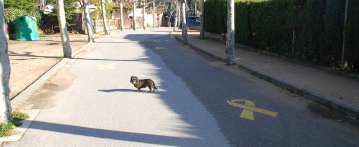 Lotte auf der Straße neben einer gelben Schleife, die auf die Straße gemalt ist