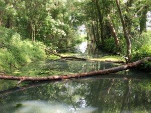 Zulauf zum Pelsiner See