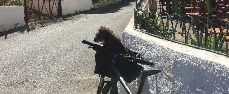 Lotte sitzt im Fahrradkorb