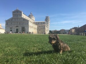 Lotte sitzt auf der Wiese vor dem schiefen Turm von Pisa