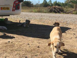 Reiseblog: Puppy2