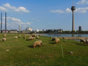 Rheinwiesen 2
