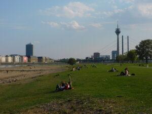 Rheinwiesen mit Fernsehturm
