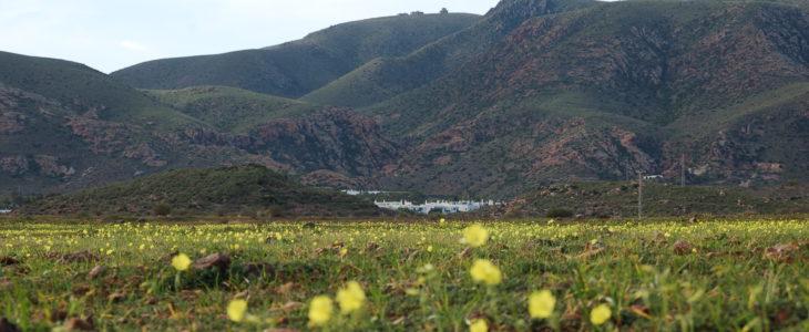 Wiese mit gelben Blumen, dahinter der Ort Rodalquilar