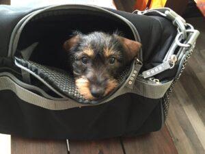Lotte in der Reisetasche