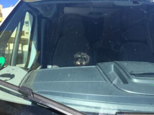 Beifahrer Lotte